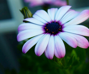 daisy, flower, and hippie image