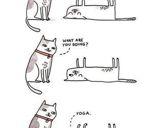 cat, fitness, and yoga image