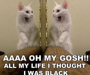 cat, funny, and mirror image