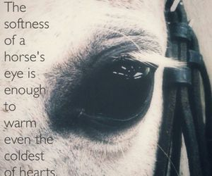 horse, quote, and love image