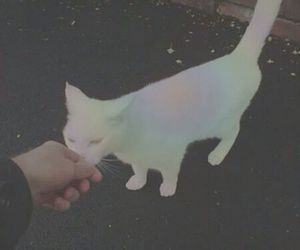 cat, rainbow, and pale image