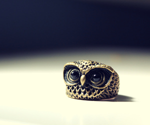 owl, cute, and ring image