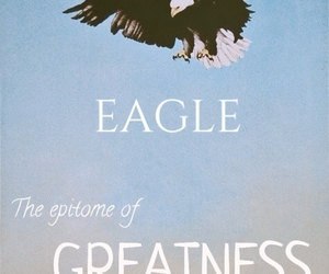 awesome, eagle, and eagles image