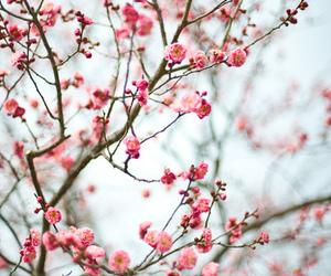 flowers, beautiful, and tree image
