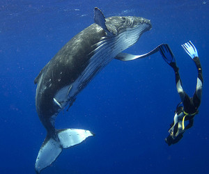 calf, roger, and whale image