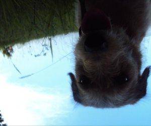 dog, nature, and sky image