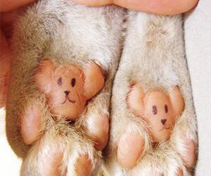 cute, cat, and paws image