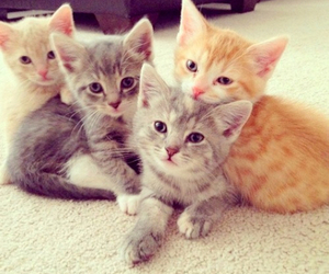 adorable, kittens, and cute image