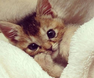 adorable, cuddle, and kitten image
