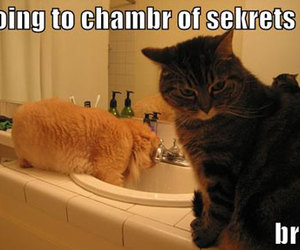 cat, harry potter, and chamber of secrets image