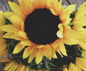 flowers, grunge, and sunflower image