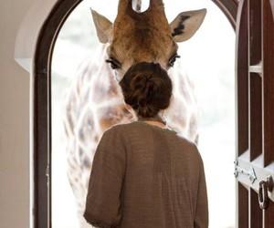 giraffe and girl image