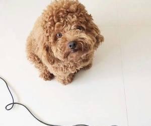 beaty, lovely, and dog image