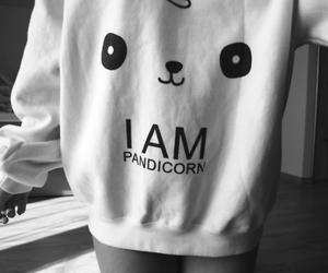 pandicorn and pandacorn image