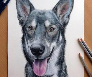 dog, drawing, and pencil image
