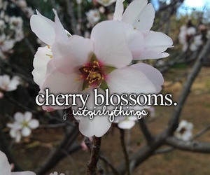 blossom and cherry image