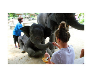 elephant and girl image