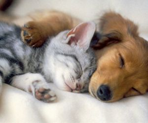 kitten, puppy, and cute image