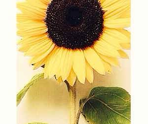 flowers, hipster, and sunflower image