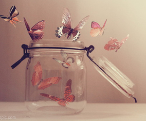 butterfly, free, and fly image