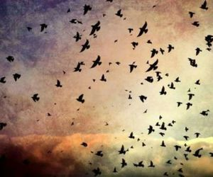birds, cielo, and clouds image