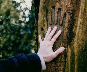 hand and tree image
