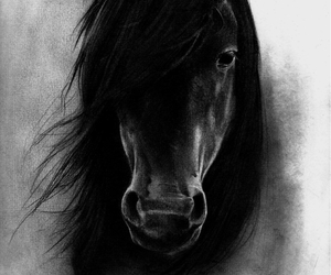 black and white, drawing, and horse image