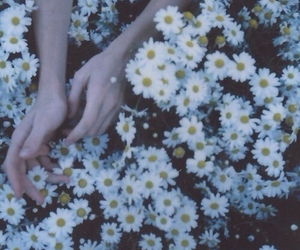 flowers, vintage, and hands image