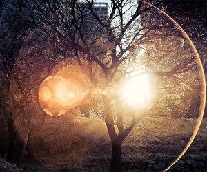tree, photography, and light image