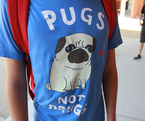pug, t-shirt, and photography image