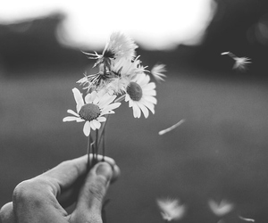 black&white, flower, and wind image