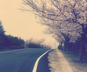 cherry blossoms, korea, and photography image