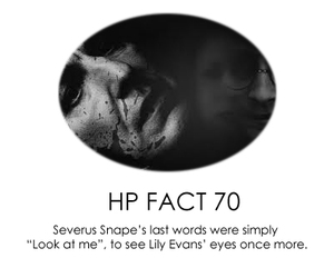 eye, lily, and potter image