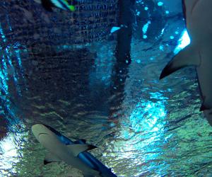 beautiful, blue, and fish image