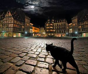 amazing, cats, and awesome image