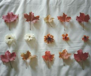 flowers, leaves, and vintage image