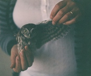 animal, faded, and vintage image