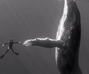 ocean, scubadiving, and snorkeling image