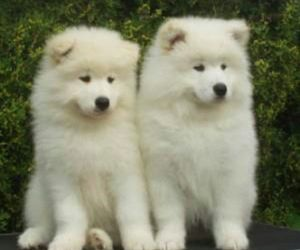 beautiful, dogs, and white image