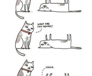 cat, yoga, and fitness image
