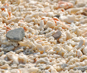 beach, summer, and coral image