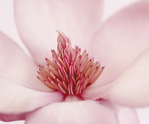 flower, makro, and pink image