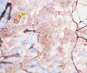 amazing, april, and lovely image