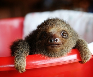 red, cute, and sloth image