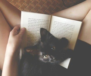 books, love, and cat image
