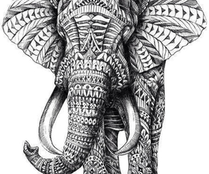 beautiful, shame, and elephant image