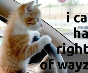 cat, driver, and driving image