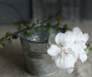 blossom and table flowers image