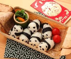 panda, food, and sushi image