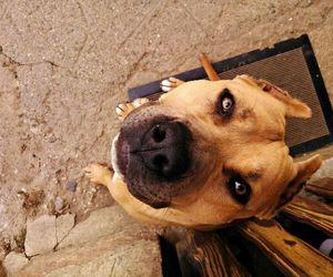 dog, eyes, and nice image